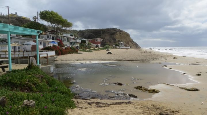 Guided nature walking tour of Crystal Cove Park